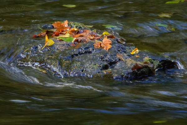 leaves-top-of-rock-river-swittersb-2a