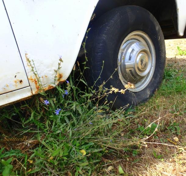 old truck, farm, weeds, SwittersB