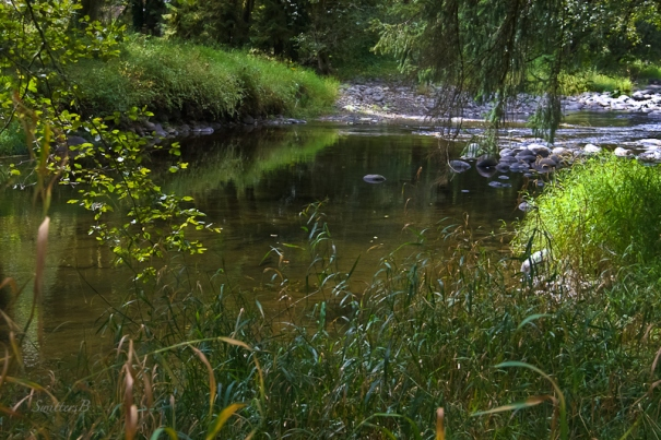 river-bank-vegetation-swittersb