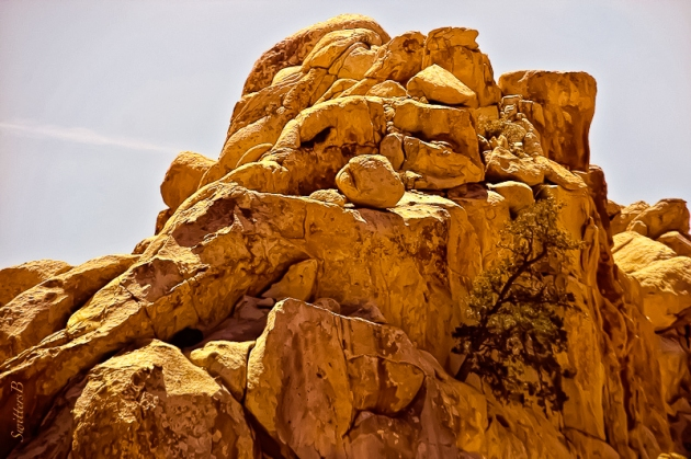 rock formation-pinyon-tree-ledge-swittersb