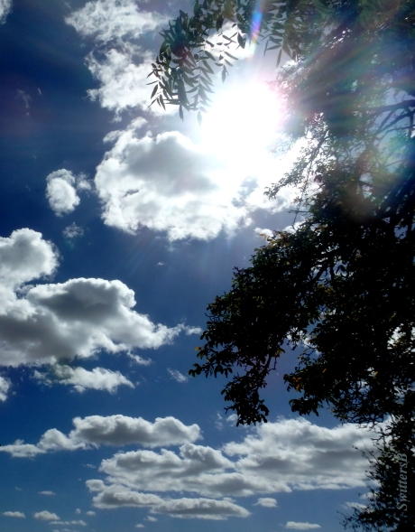 bright sun-leaves-clouds-SwittersB