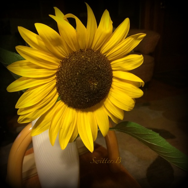 sunflower-summer-swittersb
