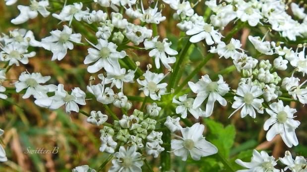 white flowers, happy, SwittersB