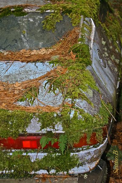 abandoned-car-fixer-upper-swittersb