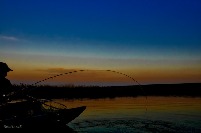 bent-rod-dusk-swittersb
