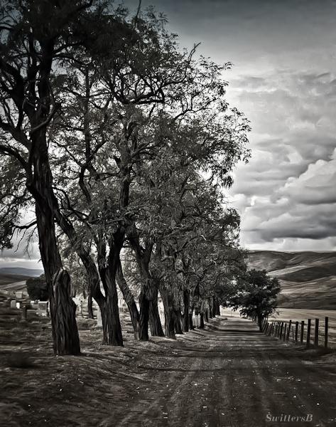 cemetery-oregon-swittersb