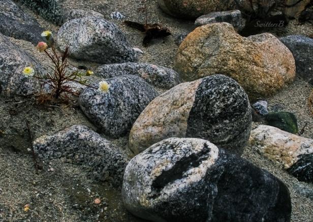 desert-black-white-rocks-swittersb