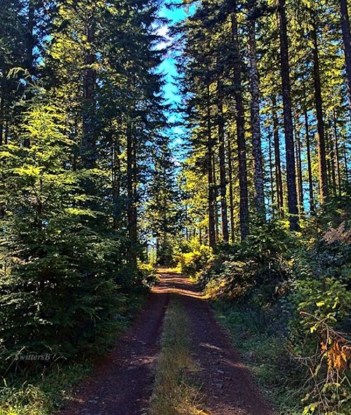 forest-road-oregon-coast-range-swittersb