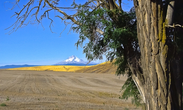 mt-hood-fields-dufur-oregon-swittersb