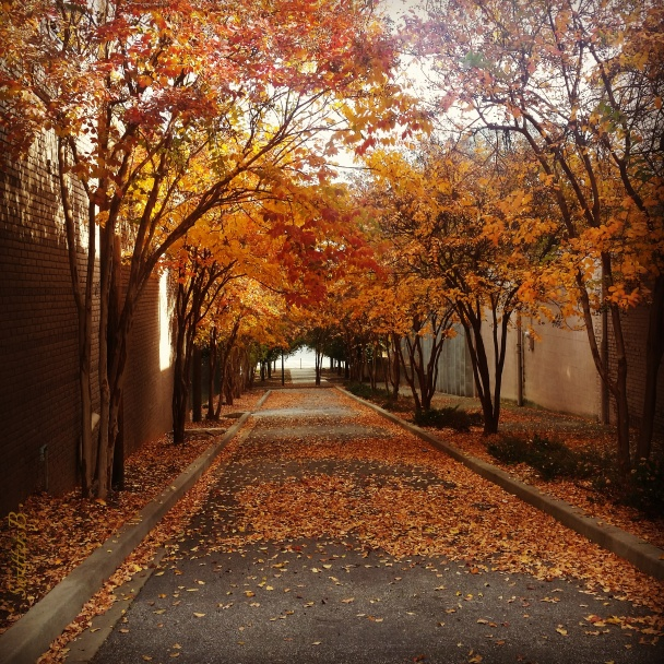 alleyway-nw-portland-fall-swittersb