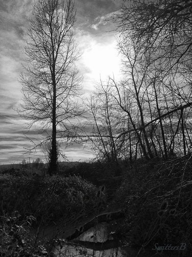 bare-trees-sauvie-island-swittersb