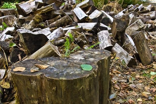 chopping-block-wood-swittersb