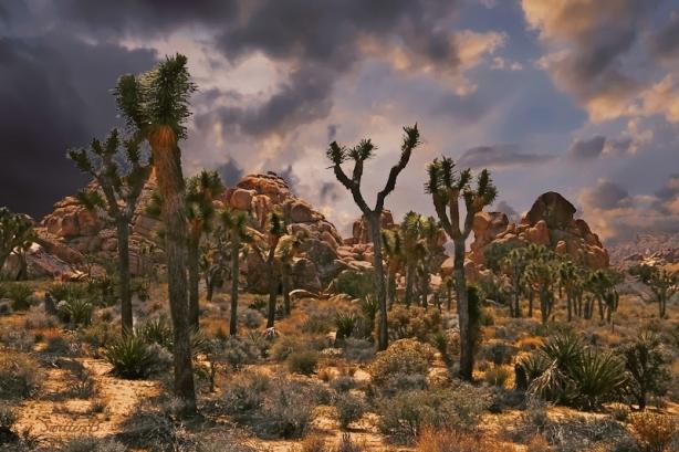 desert-scene-joshua-tree-swittersb