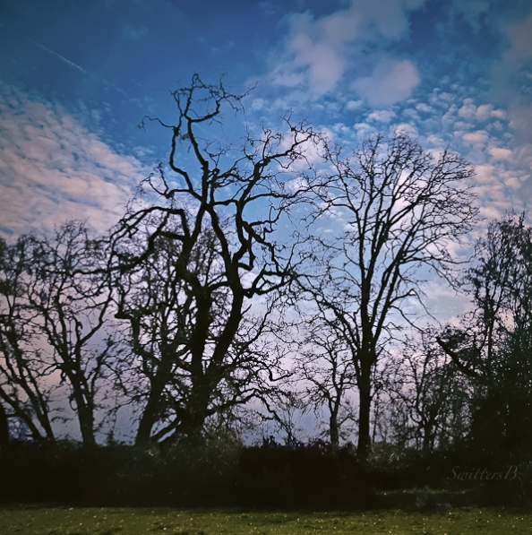 oak-trees-backlit-sauvie-island-swittersb