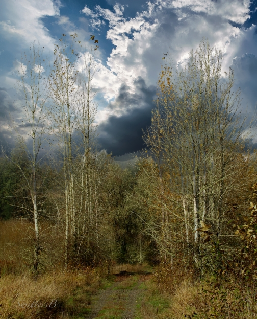 old-road-woods-brooding-clouds-swittersb