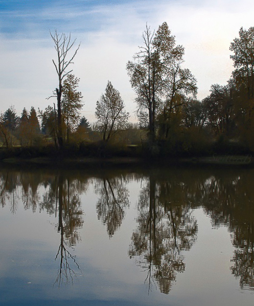 trees-x-reflections-multnomah-channel-swittersb