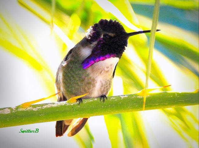 a-hummingbird-palm-branch-swittersb