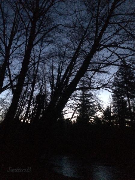 dawn-river-trees-swittersb