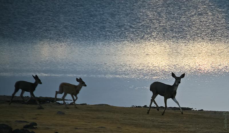 deer-lake-dawn-swittersb