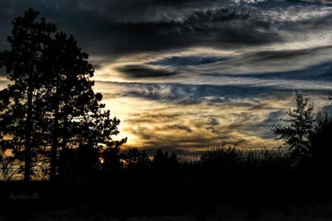 dusk-trees-sky-swittersb