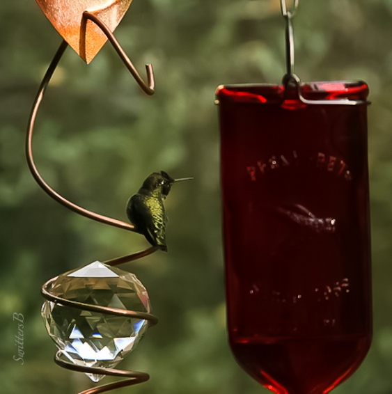 humming-bird-feeder-swittersb