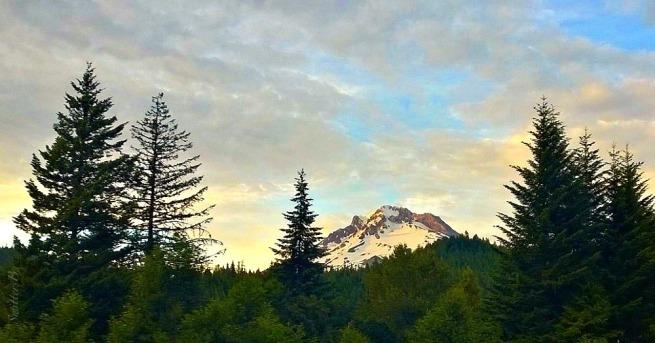mountain-trees-swittersb-oregon