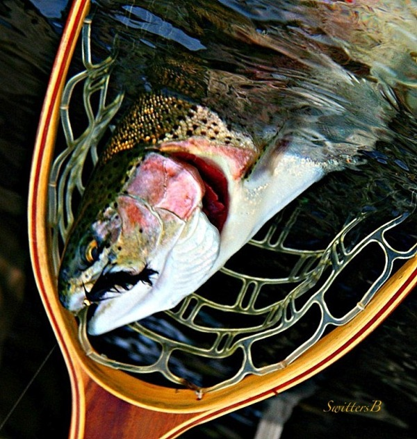 net-fly-fishing-trout-swittersb