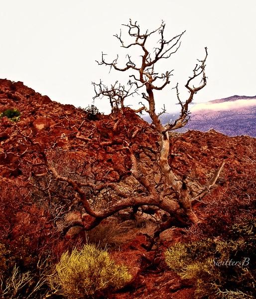 old-snag-rocky-terrain-swittersb