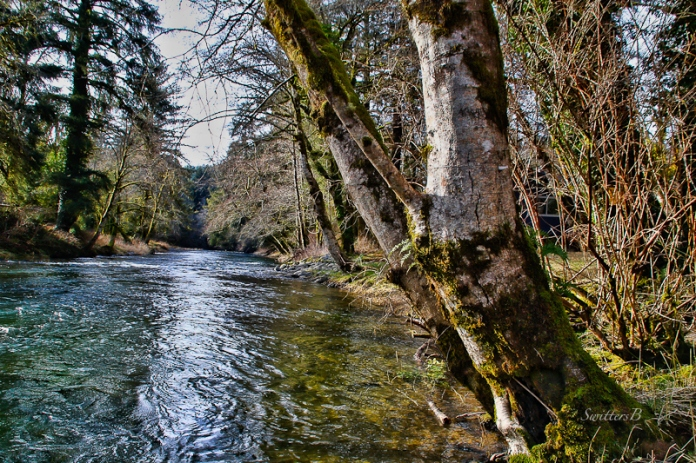 salmon-river-oregon-coast-swittersb