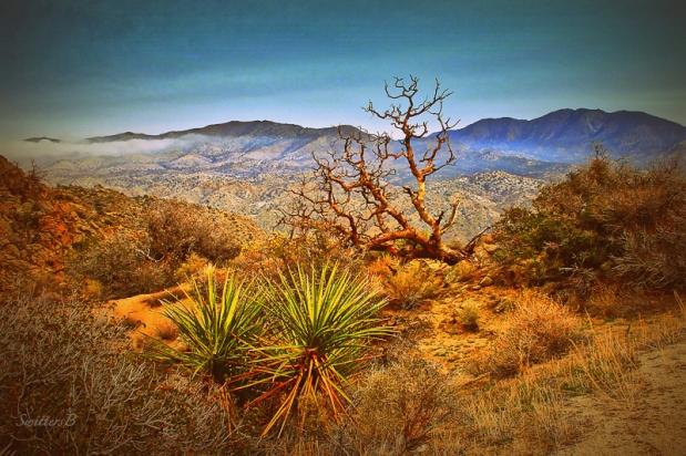 snag-high-desert-hwy-74-swittersb