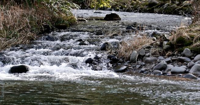 tributary-bear-creek-salmon-r-swittersb