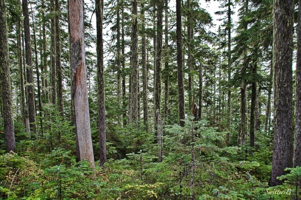 forest-trees-cascades-swittersb