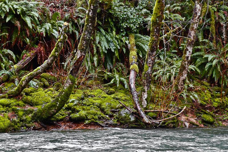 river-shoreline-wet-oregon-swittersb