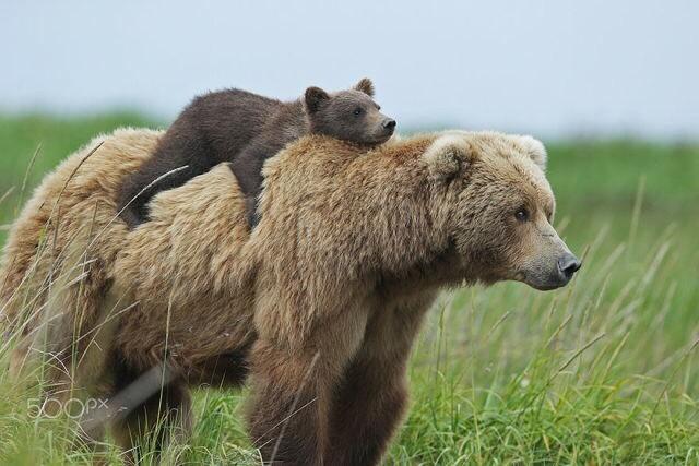 bearback