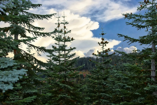 Cascades Mountains-trees-clouds-SwittersB