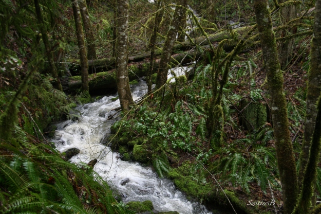 Creek-Tualatin Mountains-Oregon-SwittersB