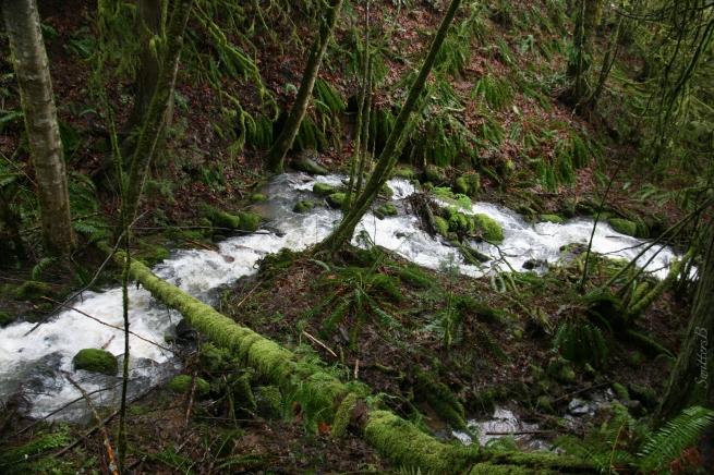 stream-woods-Oregon-SwittersB