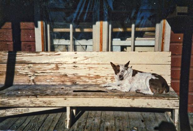 Camp-Dog-Frenchglen-SwittersB