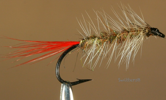 woolly worm-red tail-SwittersB