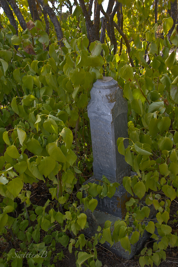Oregon-headstone-bushes-Lone Pine-cemetery-photography-SwittersB