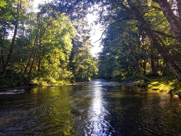 Oregon River-Coast-Shade-SwittersB