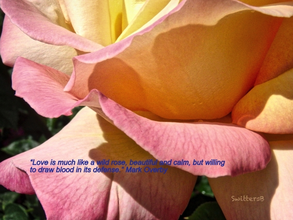rose petals-quote-SwittersB