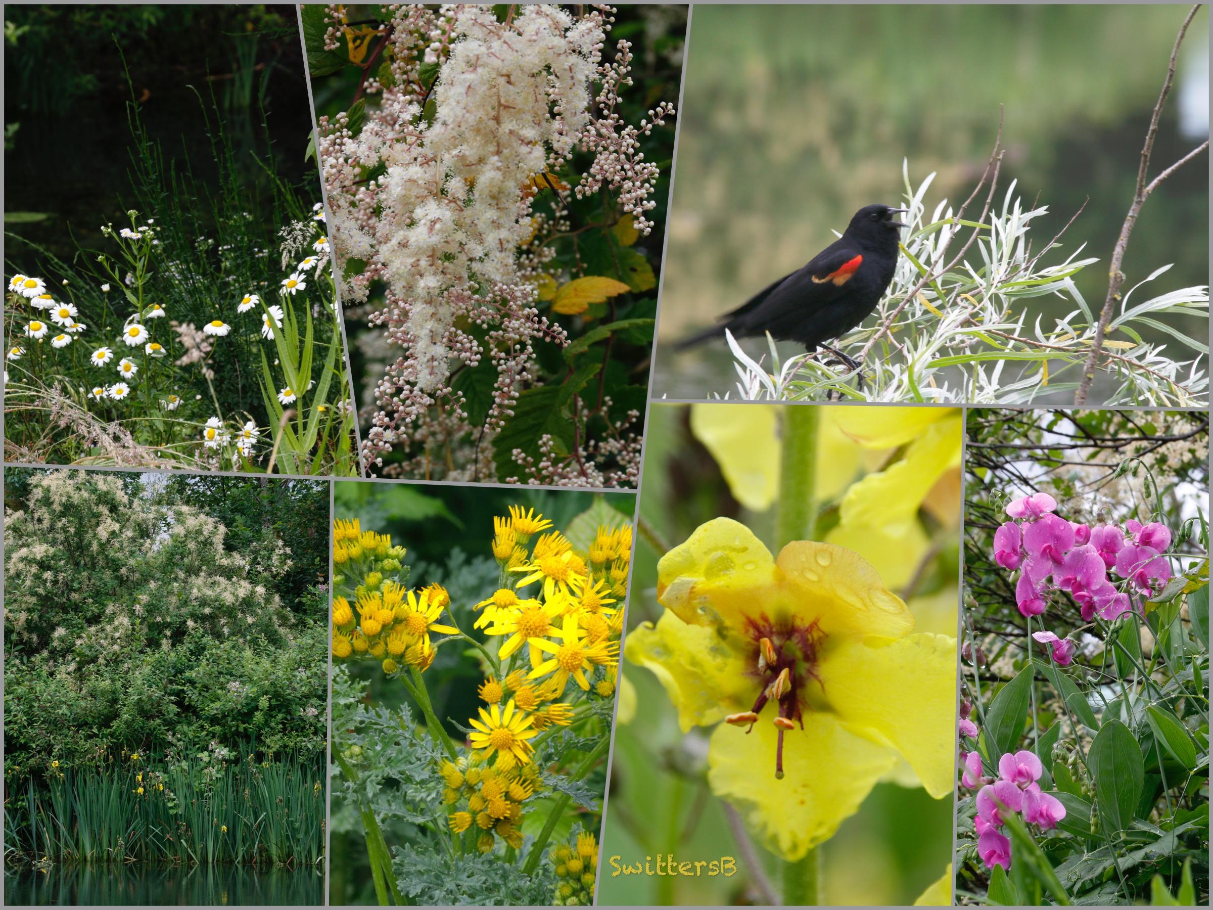 Wetland colors-Oregon-Columbia Slough-SwittersB