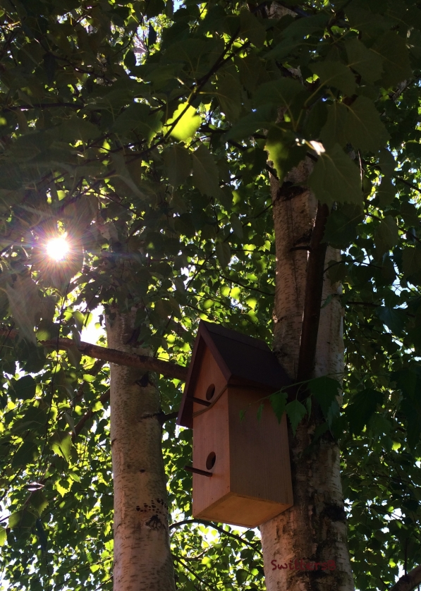 Birdhouse-birch tree-Tony-SwittersB