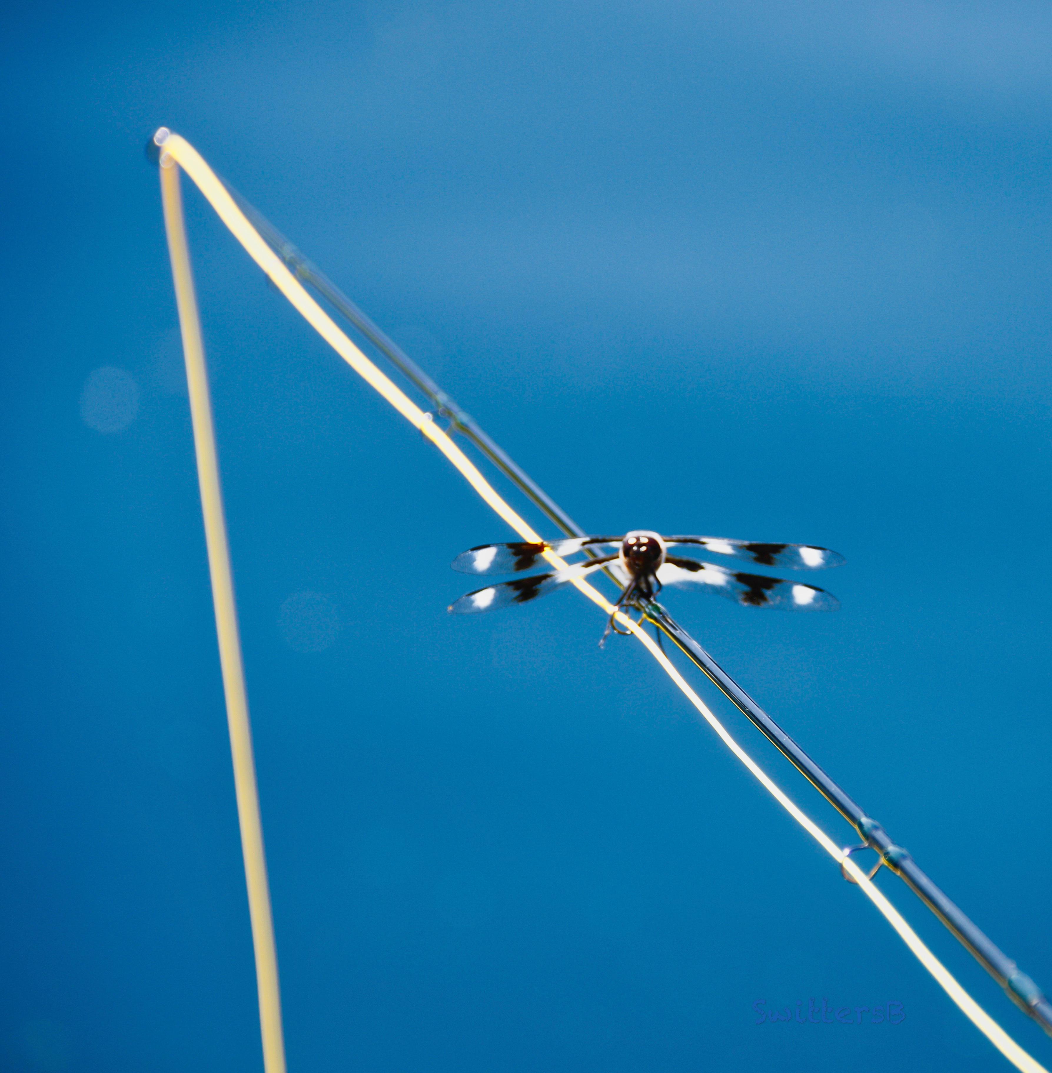 Fly Fishing-Dragon fly-SwittersB
