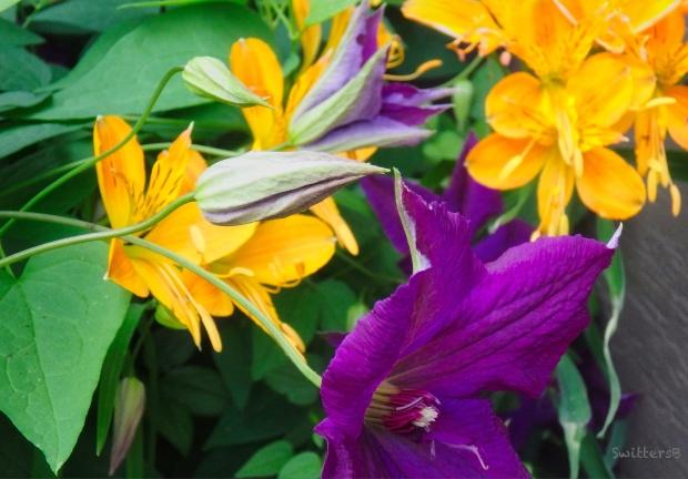 Garden-Clematis & Lily-SwittersB