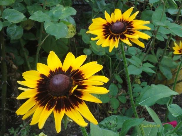 garden flowers-SwittersB