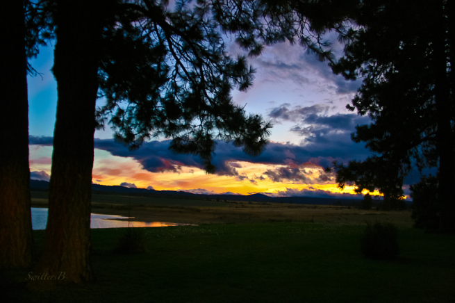 horizon-sunset-pine-trees-swittersb-oregon