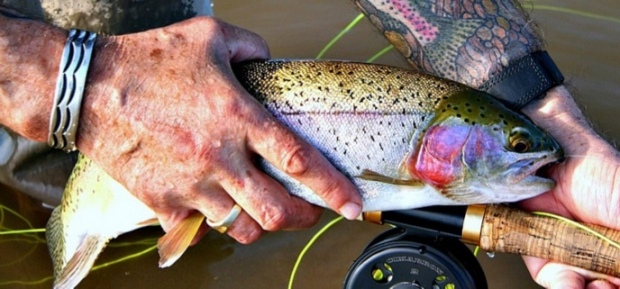 Natural Beauty-Trout-SwittersB