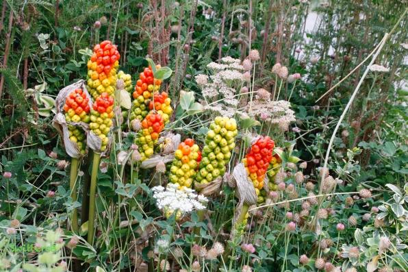 overgrown garden-SwittersB